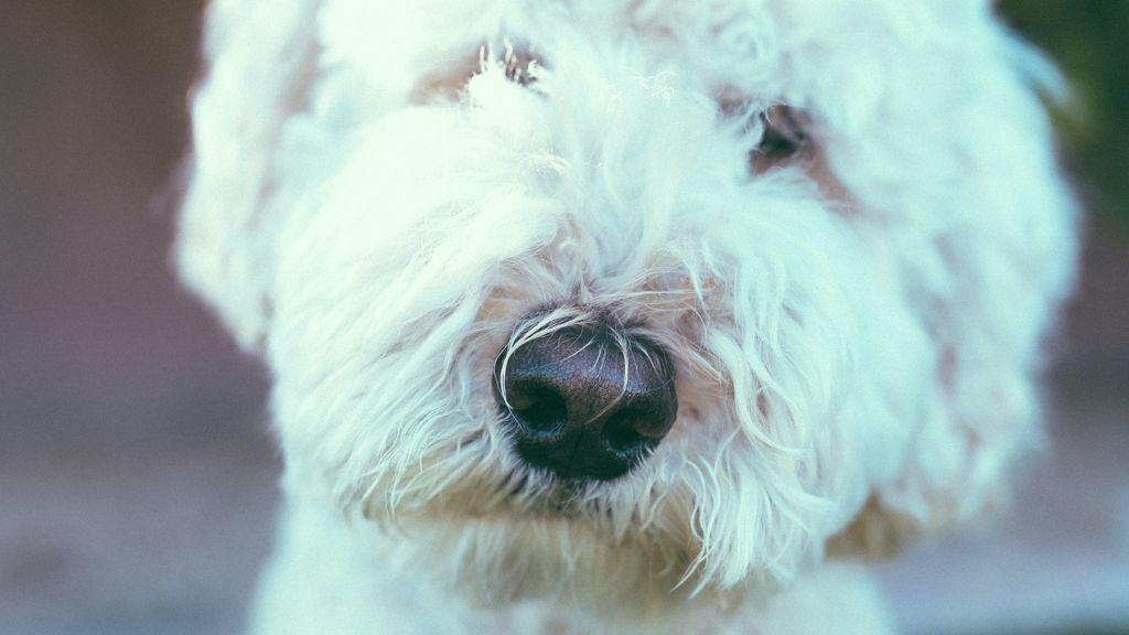 Törzsvendég a pubban Nora, a kutya.