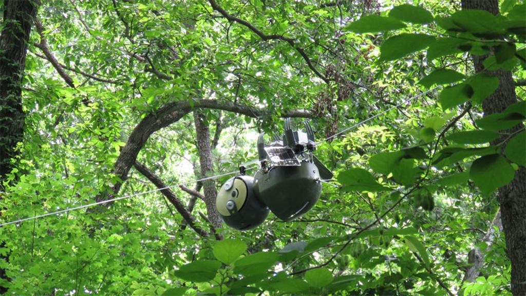 A robotlajhár lehet a drónok környezetbarát alternatívája