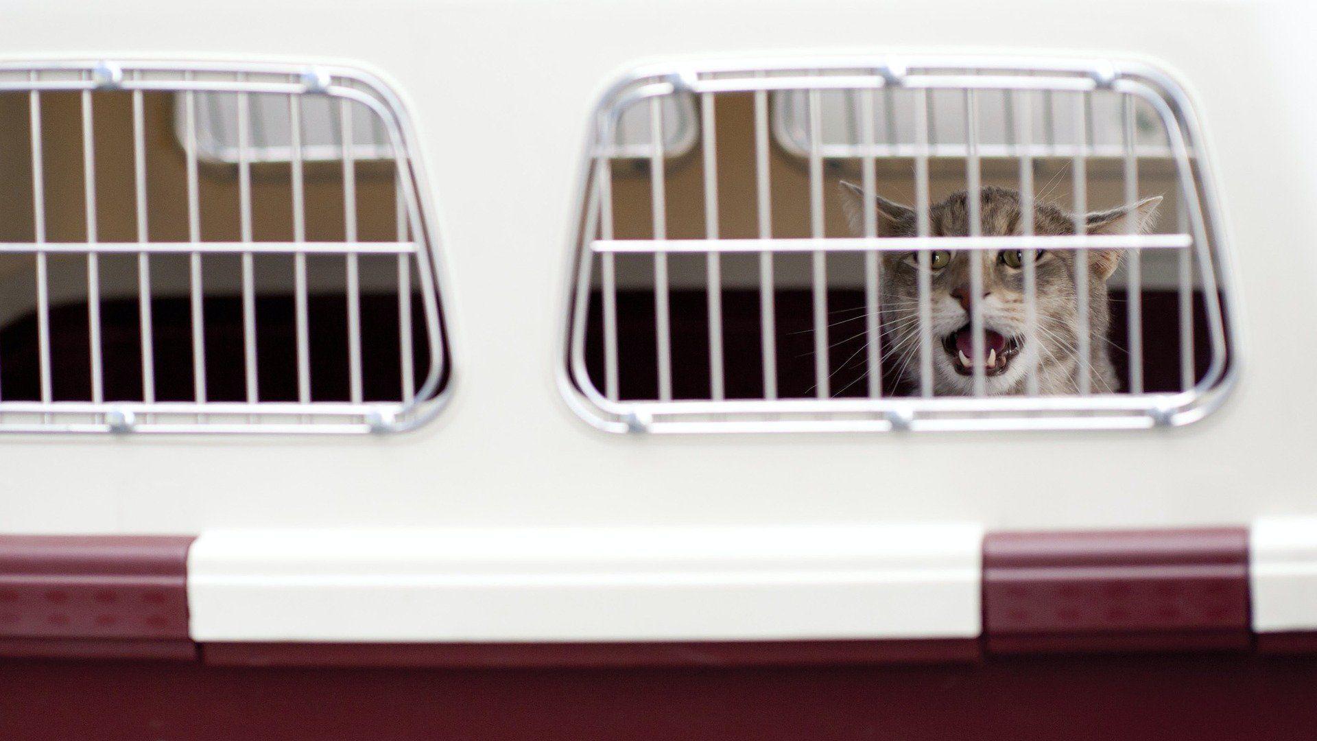 Macska hordozóban