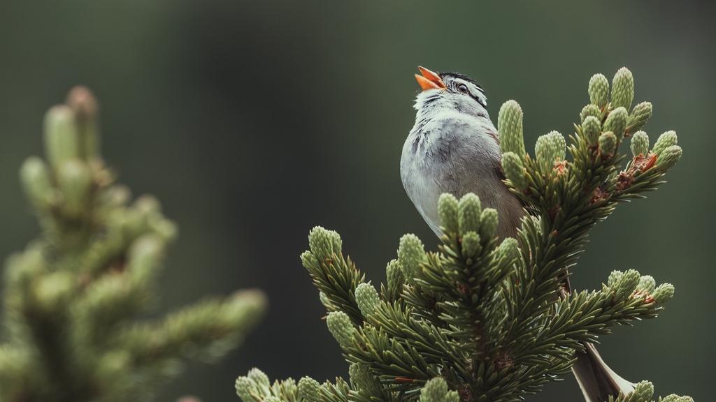 """A karantén alatt """"szexibb"""" hangon énekeltek a madarak, hogy párt találjanak."""