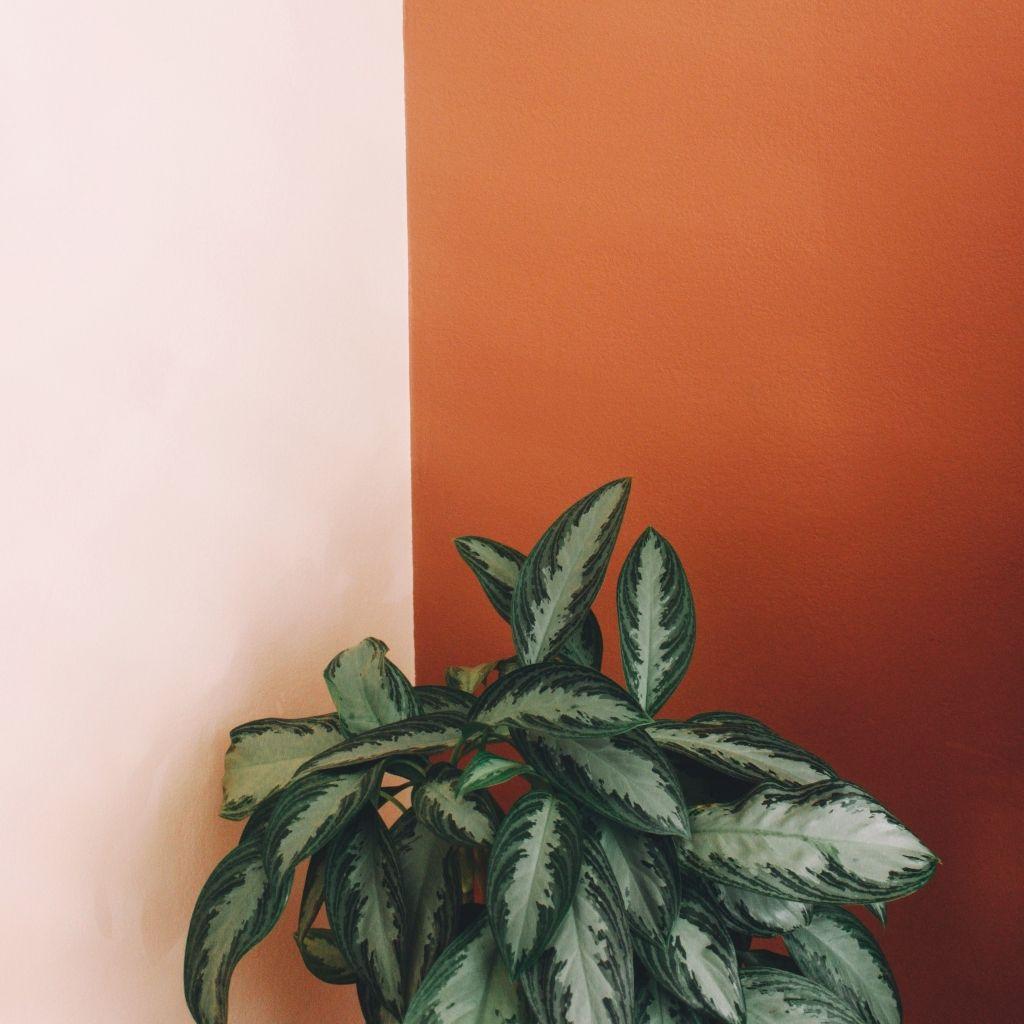 Bemutatjuk a meleg minimalizmust