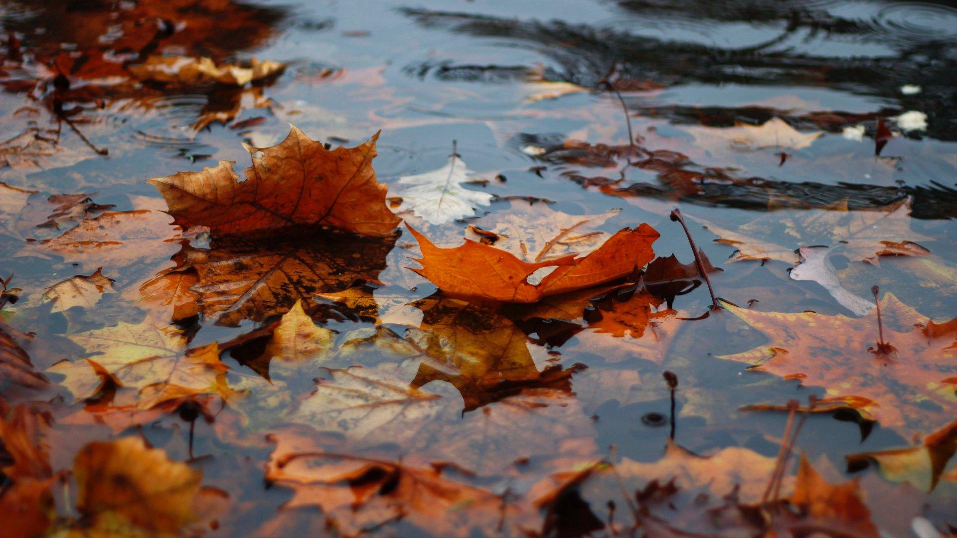Őszi levelek az eső áztatta földön
