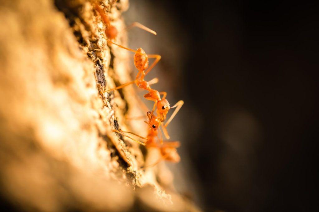 A hangyák titkos élete