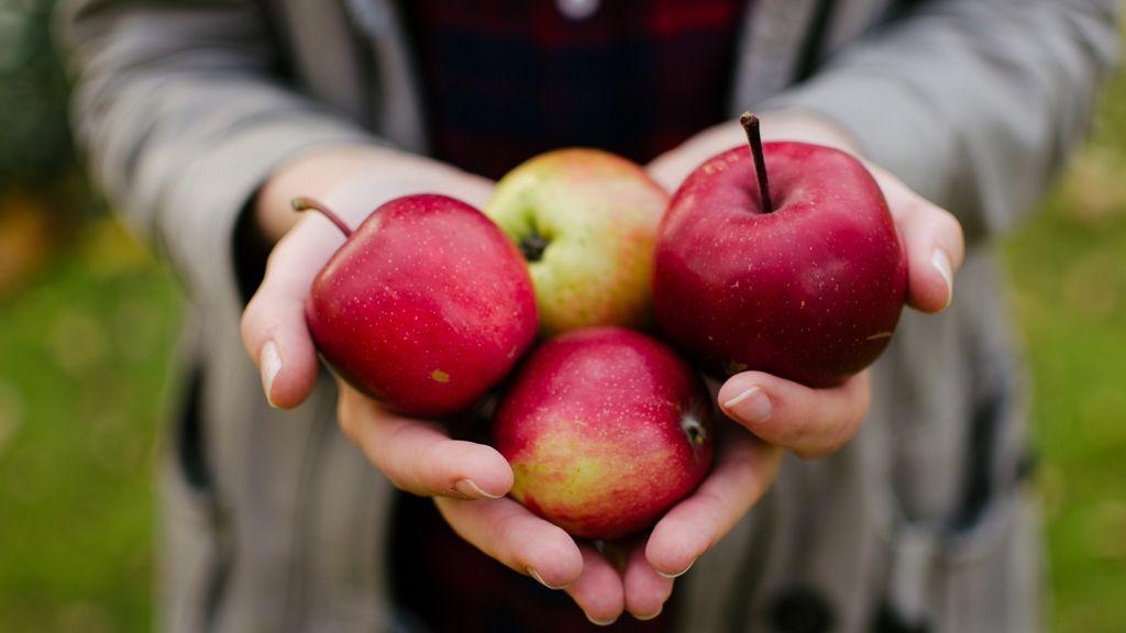 Kinyitottak a Szedd magad almaföldek