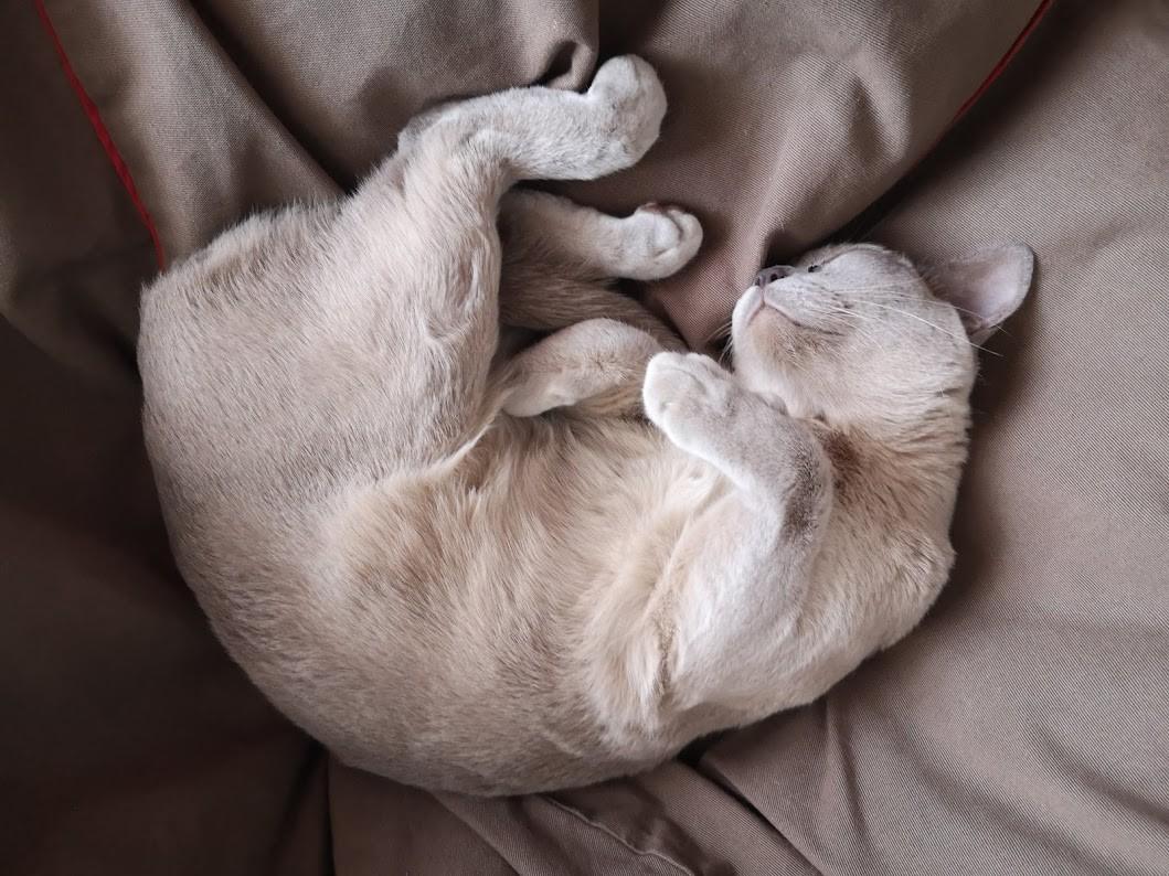 Macskatekercs babzsákon. (Fotó: nlc)