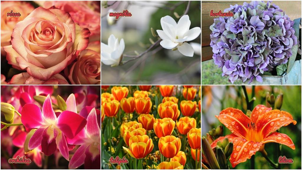 Melyiket válaszod a gyönyörű virágok közül?