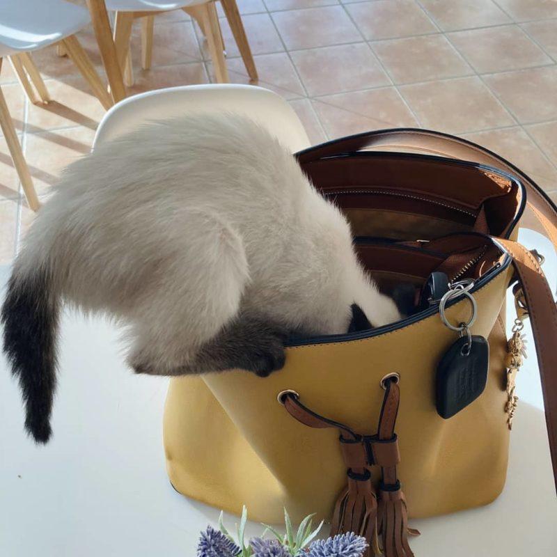 A macskás kávézó körül nagy a felháborodás, csak vita közben elvész a lényeg