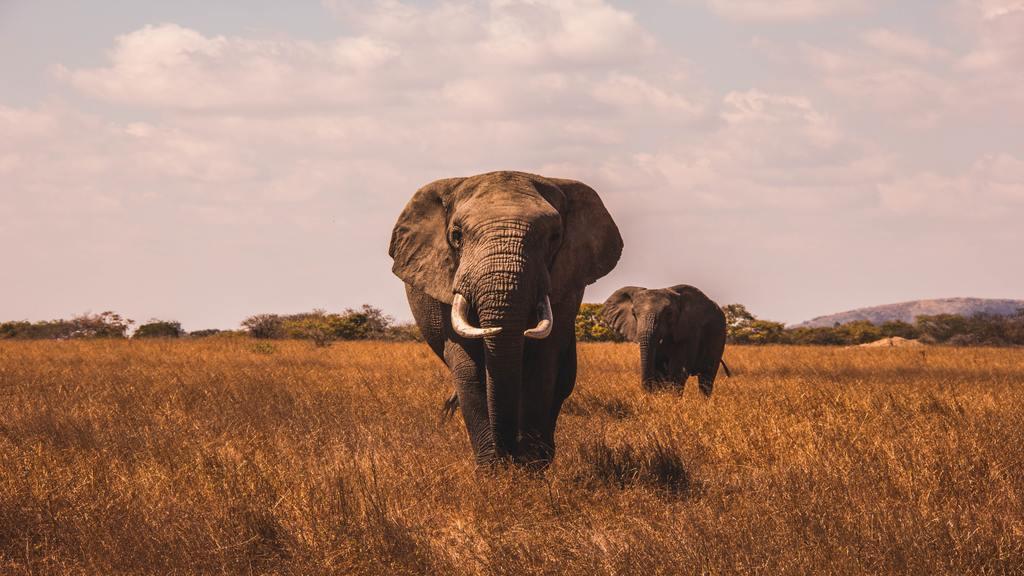 Szadai szafaripark elpusztult elefántjai