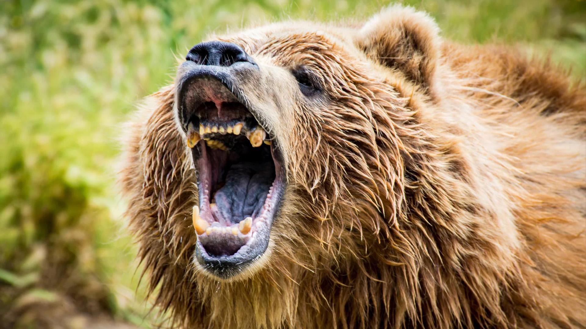 Puszta kézzel ölte meg a medvét