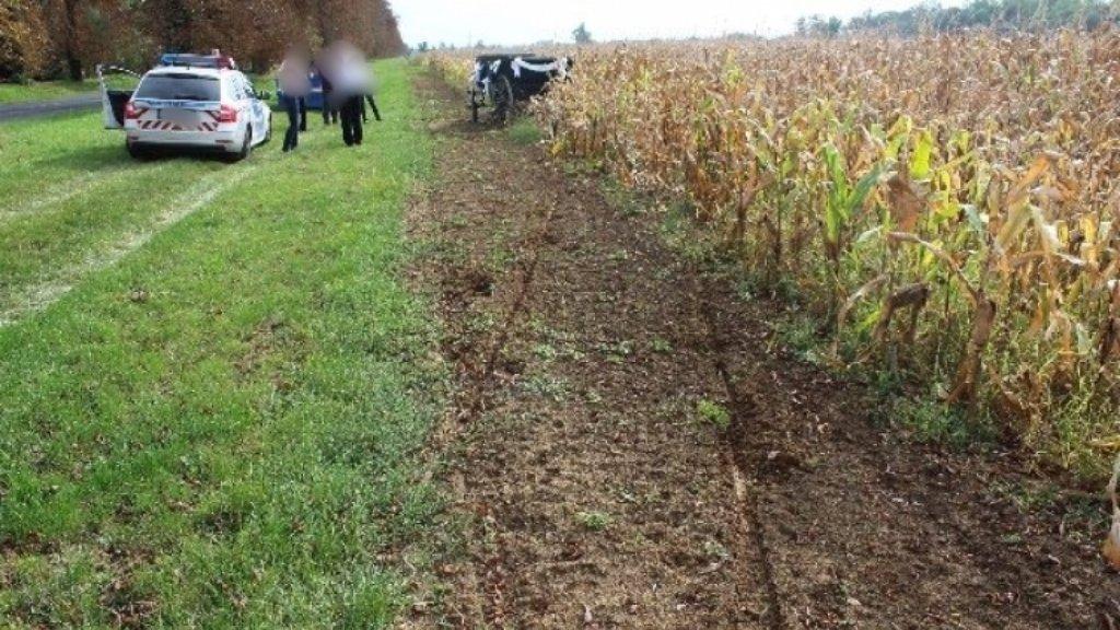 Megbokrosodott lovak okoztak balesetet Keszthelyen