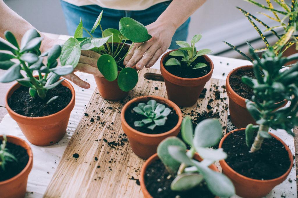 A növényszülőség is tartogathat meglepetéseket