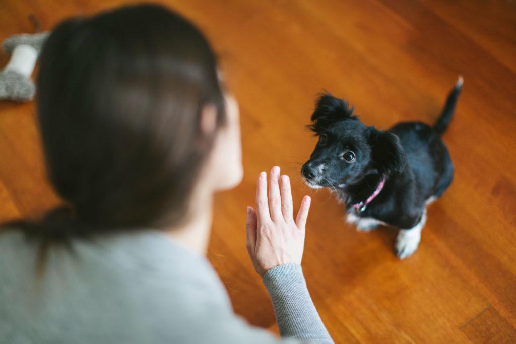 A kutya érti az emberi beszéd érzelmi töltetét