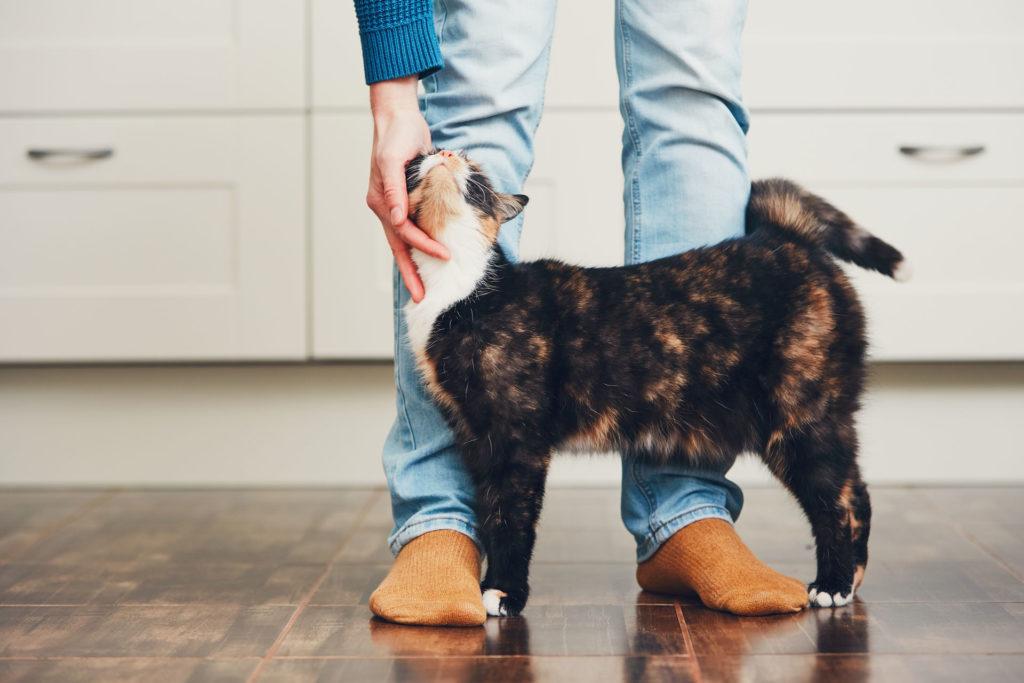 A macskák gyakran ahhoz mennek oda, akik nem szeretik őket