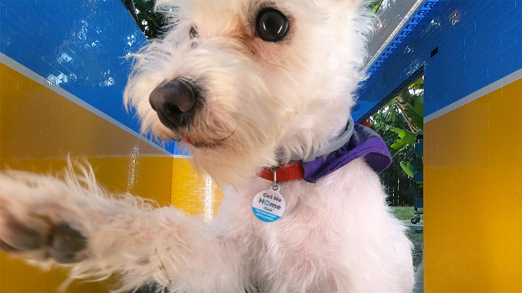 Szelfistúdiót épített a kutyájának a béna robotok királynője