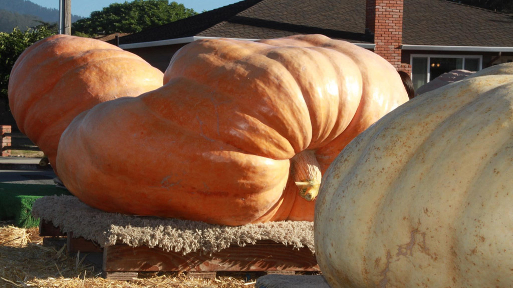 Fotó: Safeway World Championship Pumpkin Weigh-Off Facebook oldala
