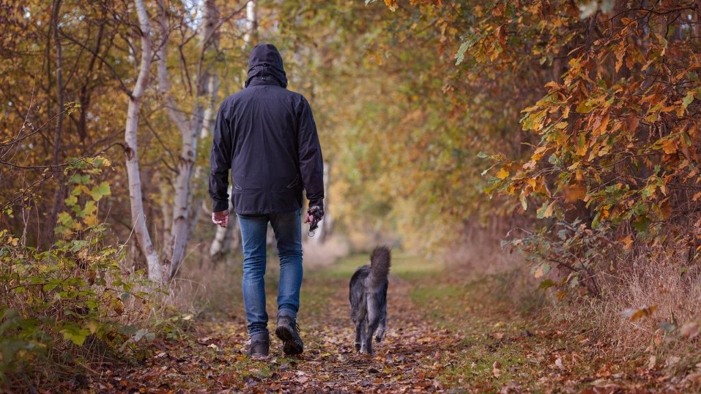 Heti holdhoroszkóp - erdei séta