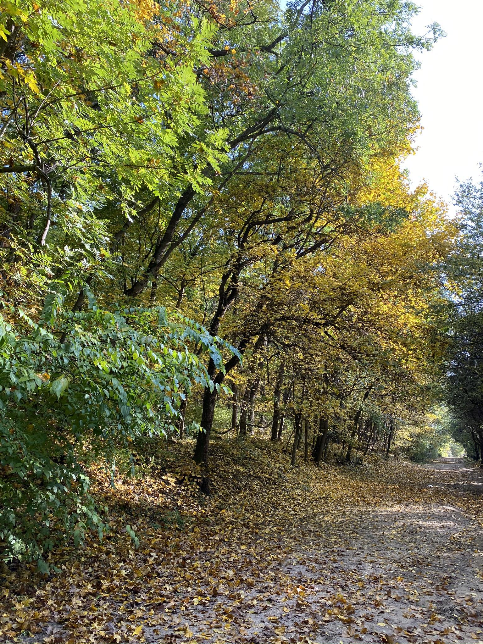 Budapesti Kamaraerdő októberben