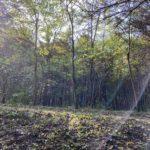 Budapesti Kamaraerdő kirándulás