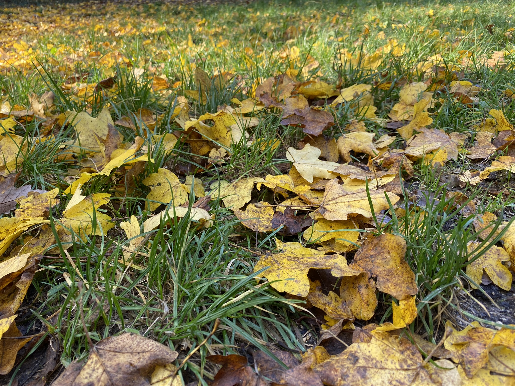 Budapesti Kamaraerdő ősszel