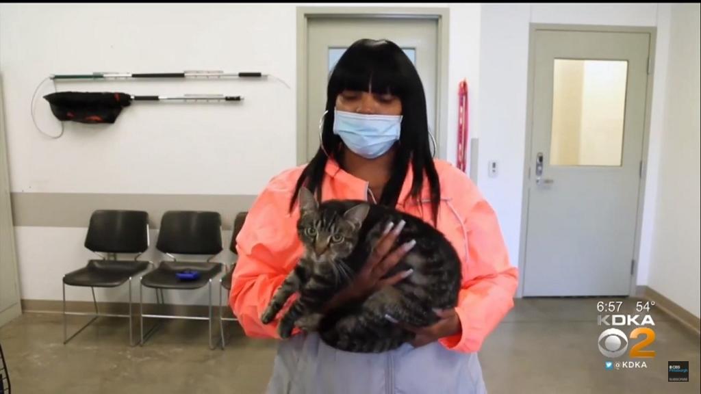 5 hónap után lett meg a tűzvészben elveszett cica
