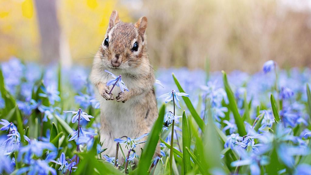 mókus a virágok közt