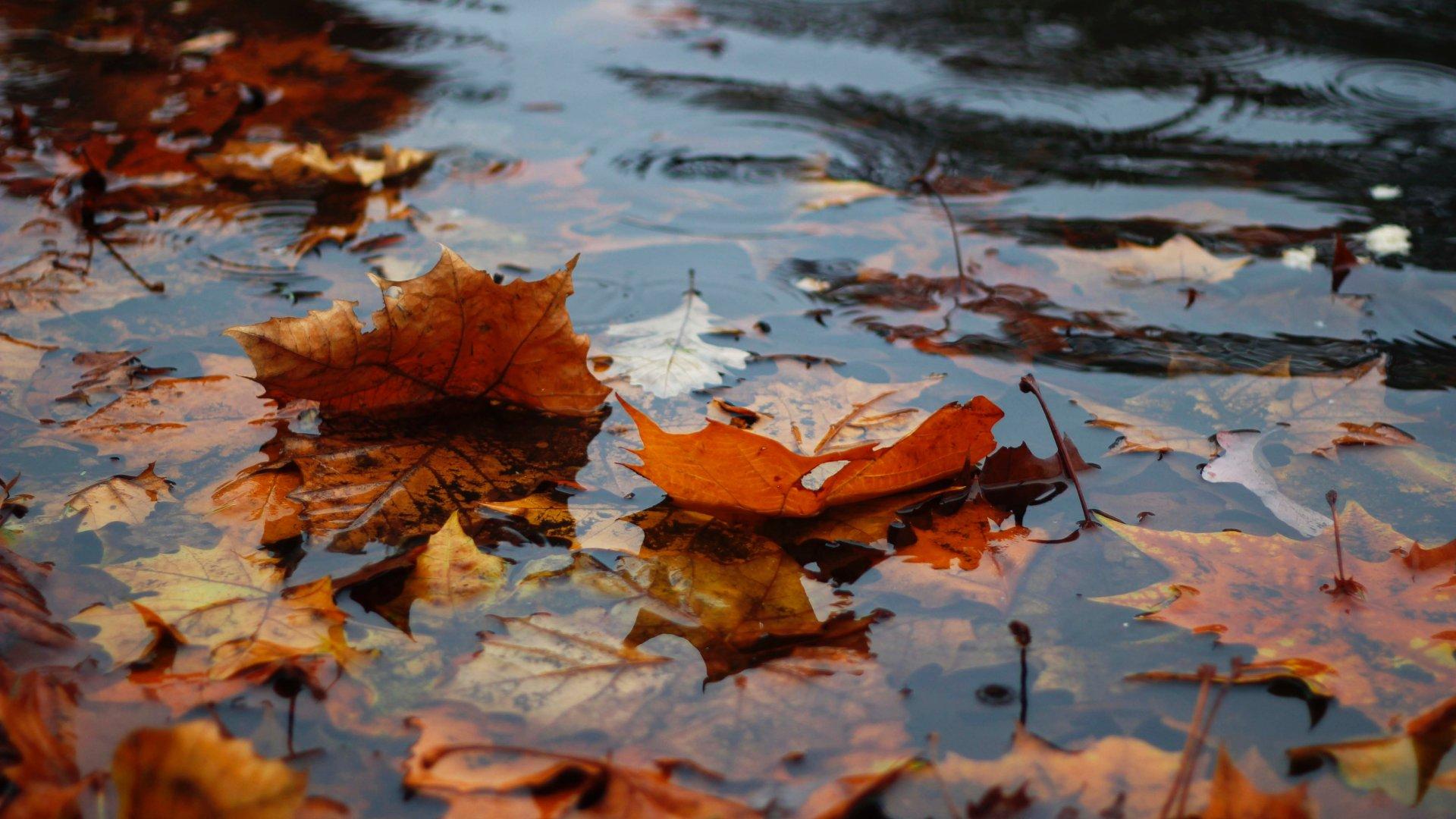 Esős őszi idő