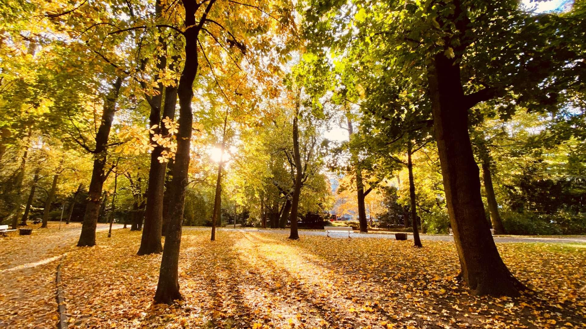 Napsütéses őszi táj