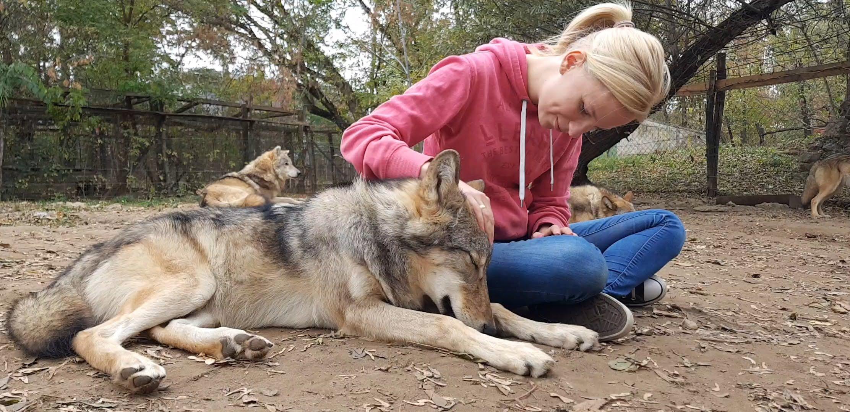 A kutya nem egyszerűen egy szelíd farkas, ahogy a farkasból sem lehet házikedvencet csinálni. Fotó: Leéb Ádám