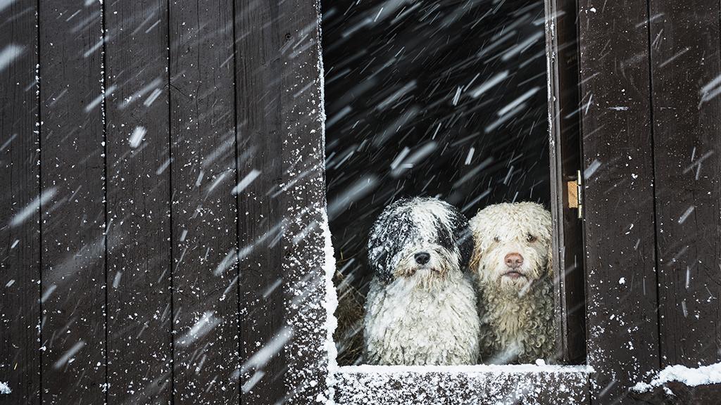 Megérkezett az idei első hó Magyarországra