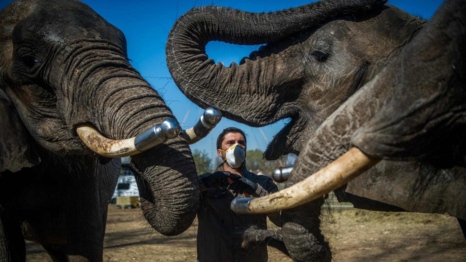 Elefántok a szadai szafariparkban