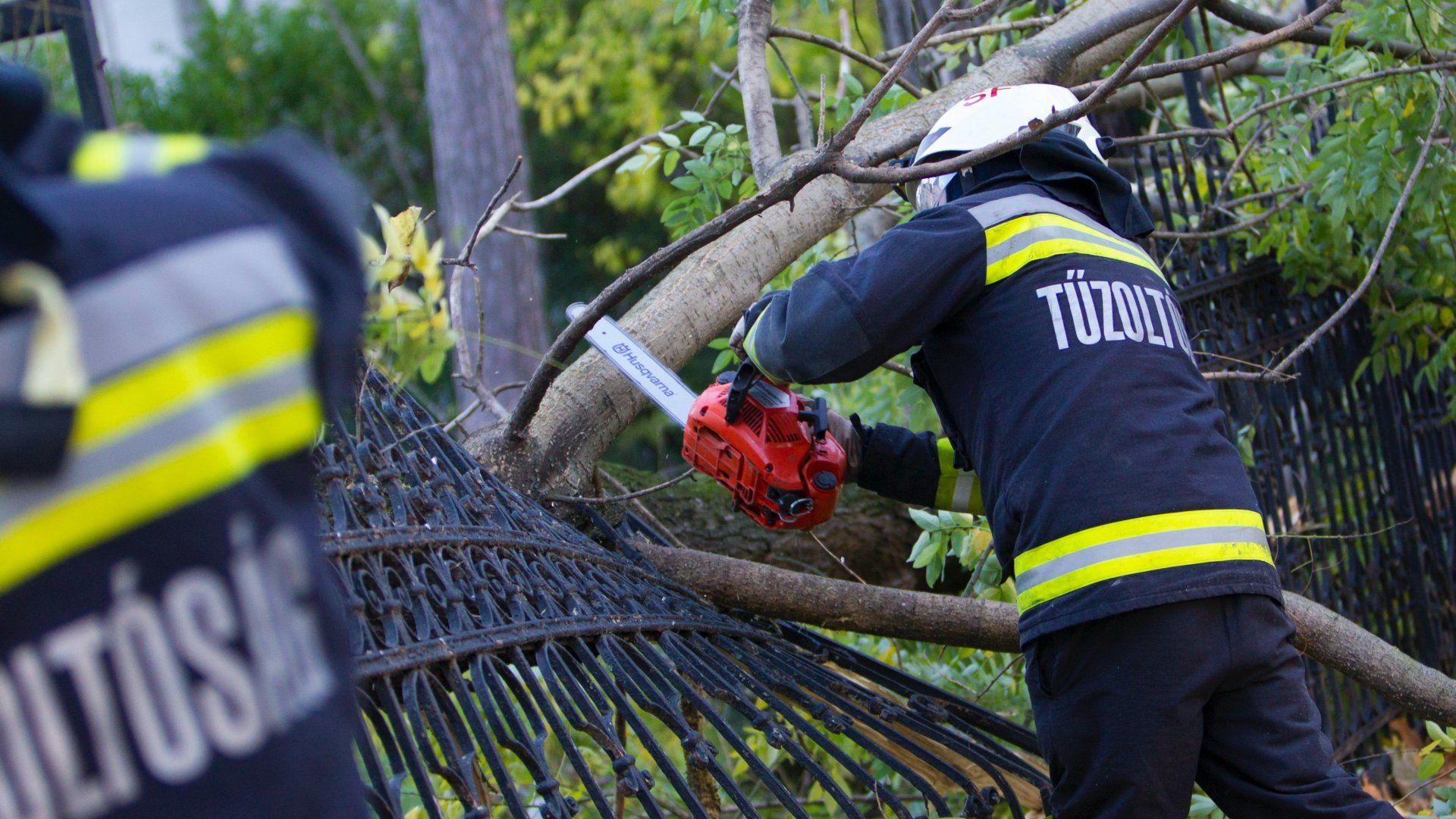 Viharban kidőlt fát távolítanak el a tűzoltók