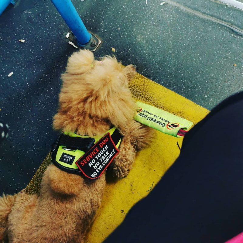 Sokan nem veszik figyelembe a jelzéseket a kutyán