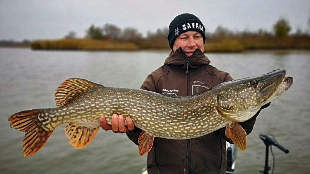 Óriás halak a Tisza-tavon