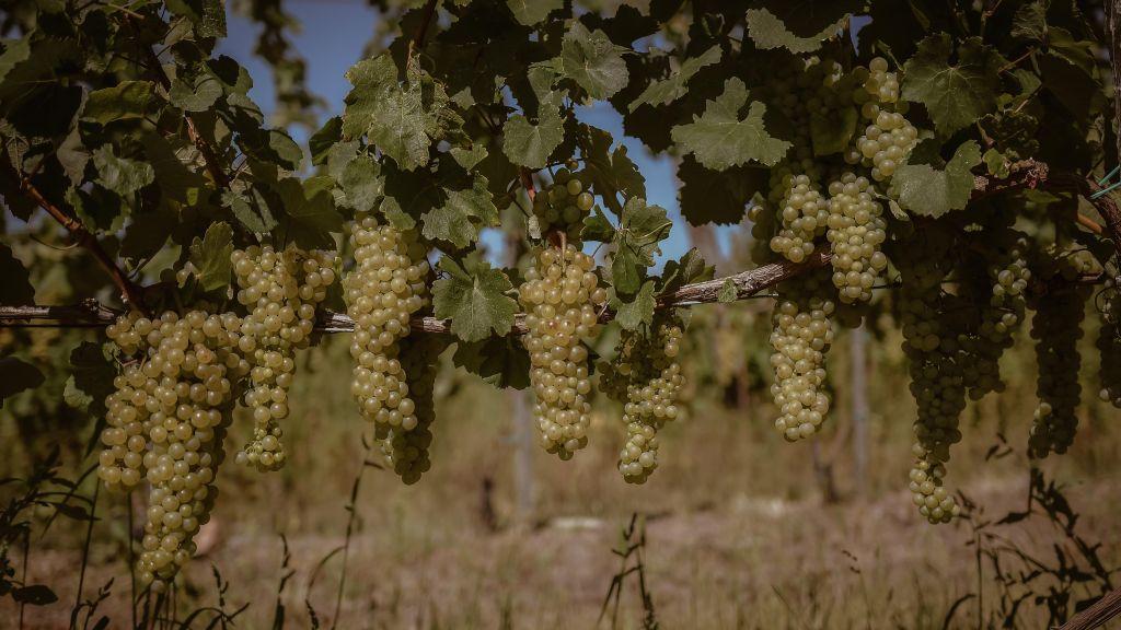 Gilberries borok advent nyeremény