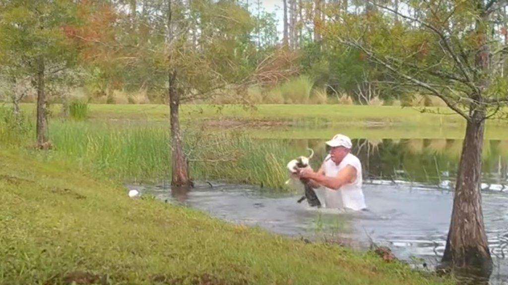 Aligátor ragadta el a nyugdíjas kutyáját