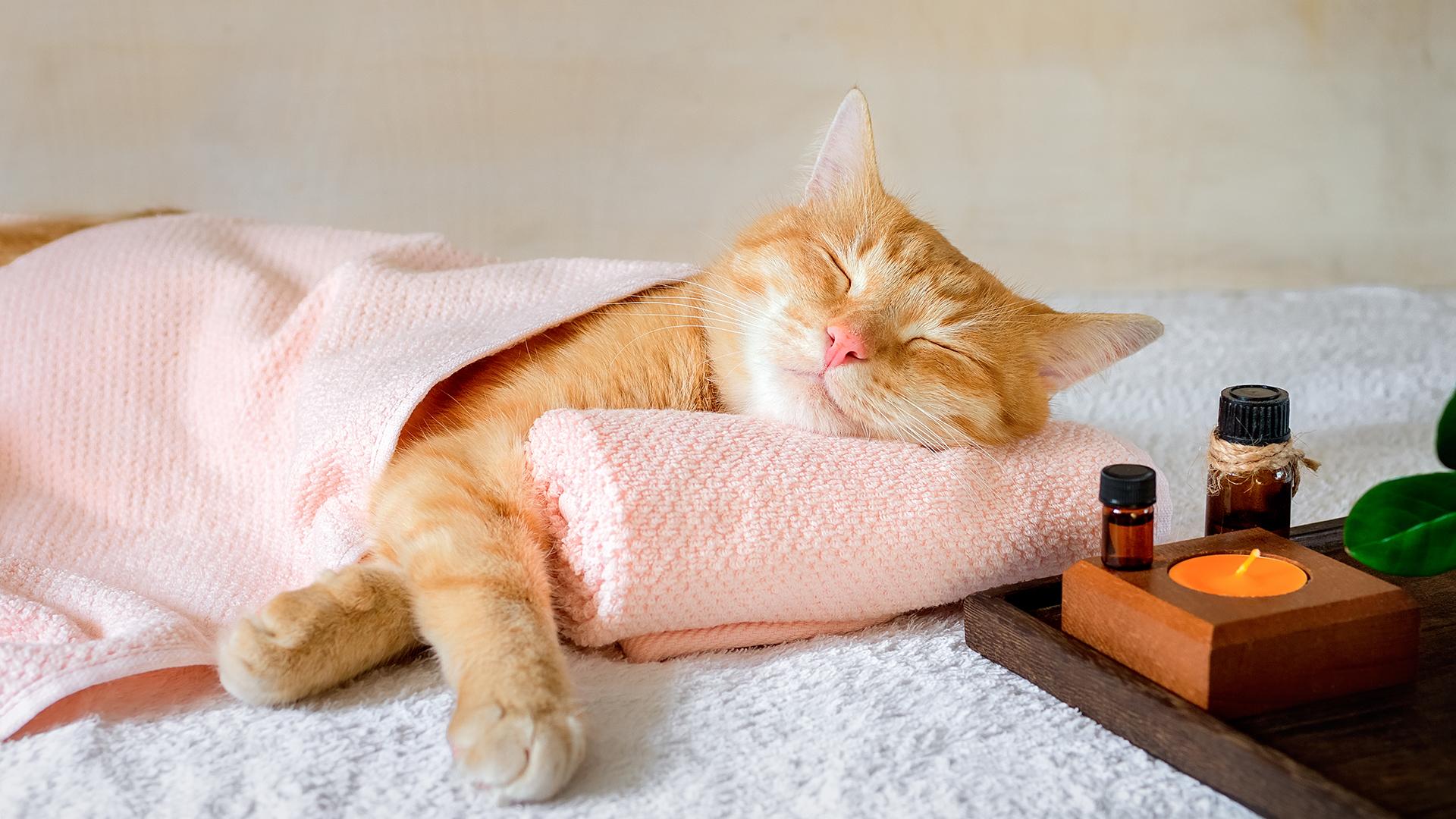 Cuki macskawellnesst kapott a család cicája