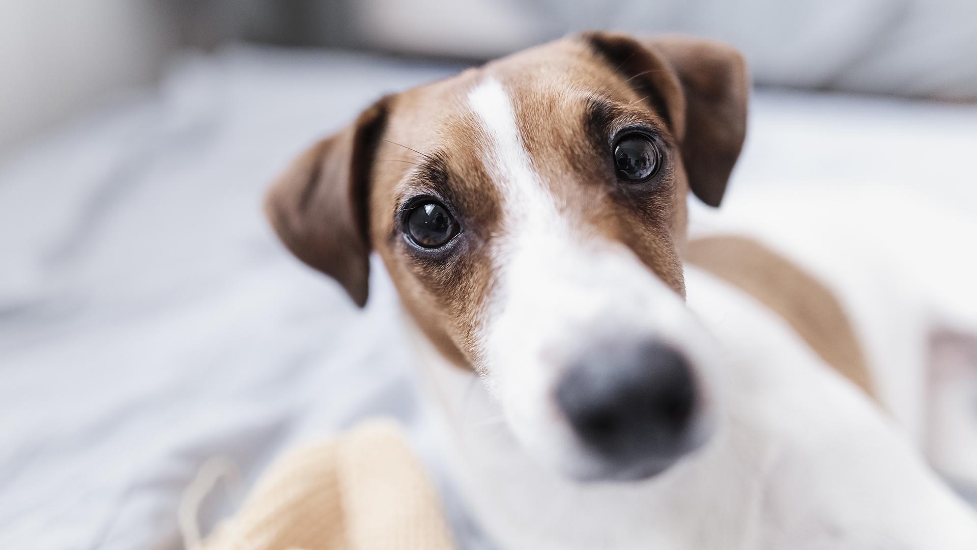 Furcsa kutyát sétáltatva próbálta meg kicselezni kijárási korlátozást egy férfi