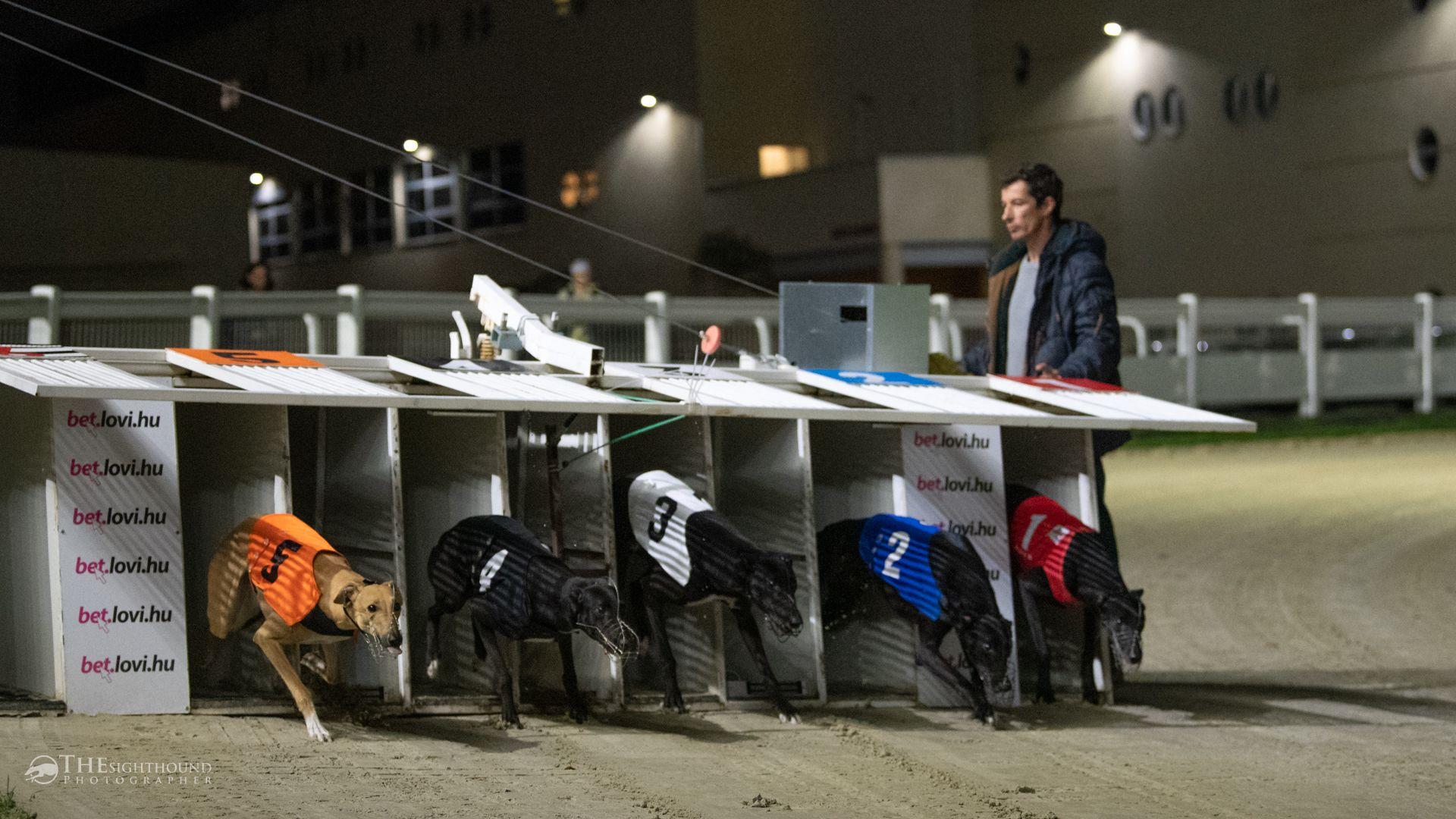 Fotó: The Sighthound Photographer