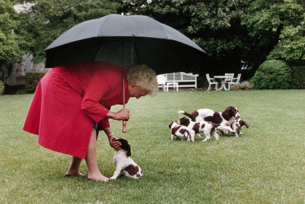 Barbara Bush Millie-vel és kölykeivel játszik a Fehár Ház kertjében. (Photo by © CORBIS/Corbis via Getty Images)