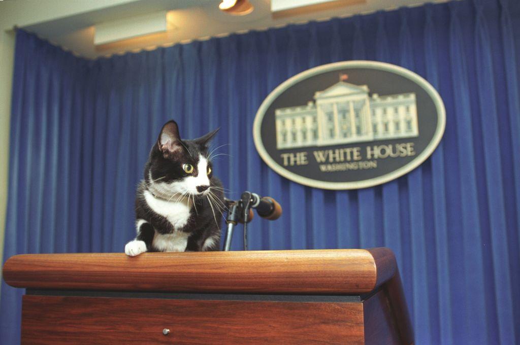 Socks, vagyis Zokni, a Clinton házaspár macskája a Fehér Ház sajtószobájának pódiumán pózol 1993-ban (Photo via Smith Collection/Gado/Getty Images).