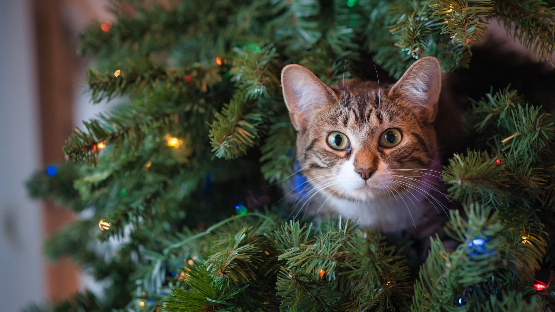 Ne hagyjuk őrizetlenül a fa mellett a kutyát vagy cicát