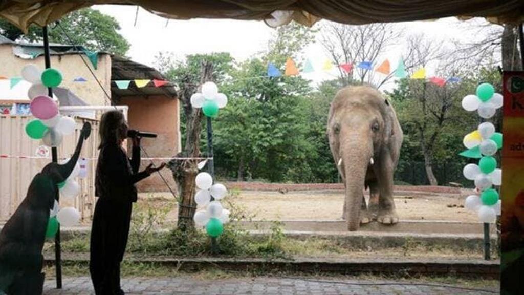 Új életet kezd Kavan, a világ legmagányosabb elefántja