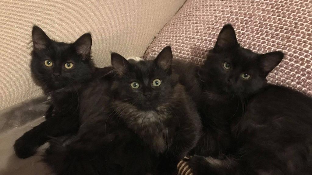 Bemutatta cicáit megmentpjének a kóbor macska