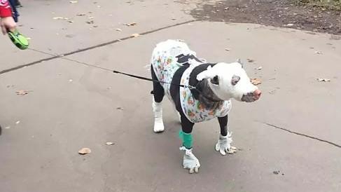 4 ember köszönheti az életét a hős kutyának.