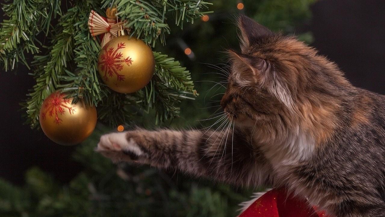 Karácsonyfa macskával.