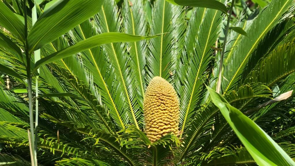 A briteknél rég kihalt növényt keltett életre a klímaváltozás (Fotó: botanic.co.uk)