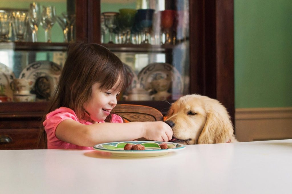Ilyenkor a háziállatoknál is gyakori a gyomorprobléma