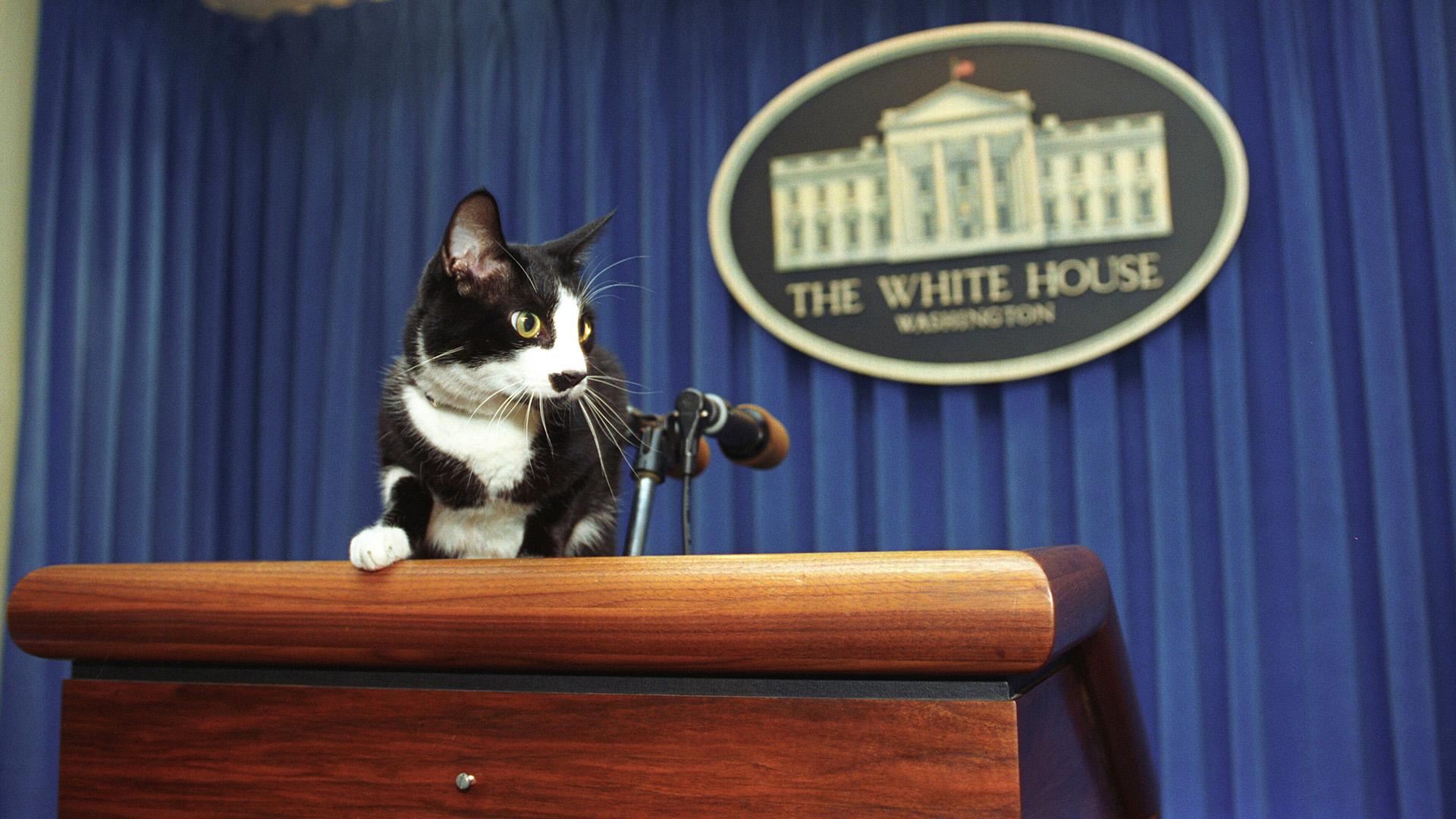 Socks, a Fehér Ház cicája