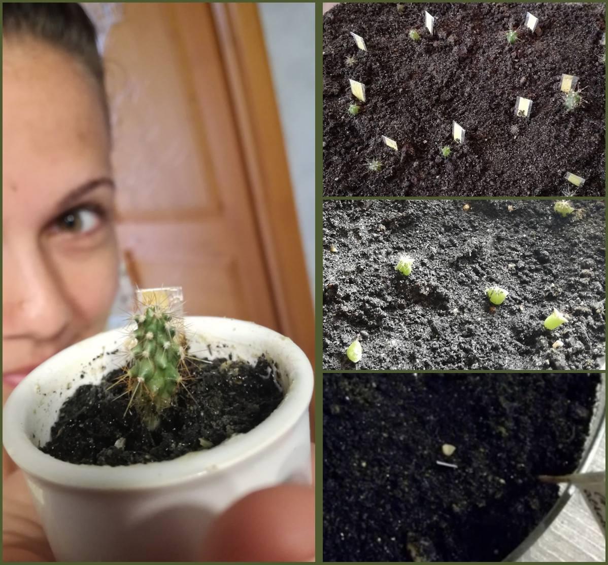 Közösen ültetnek és szüretelnek a Zöldítők