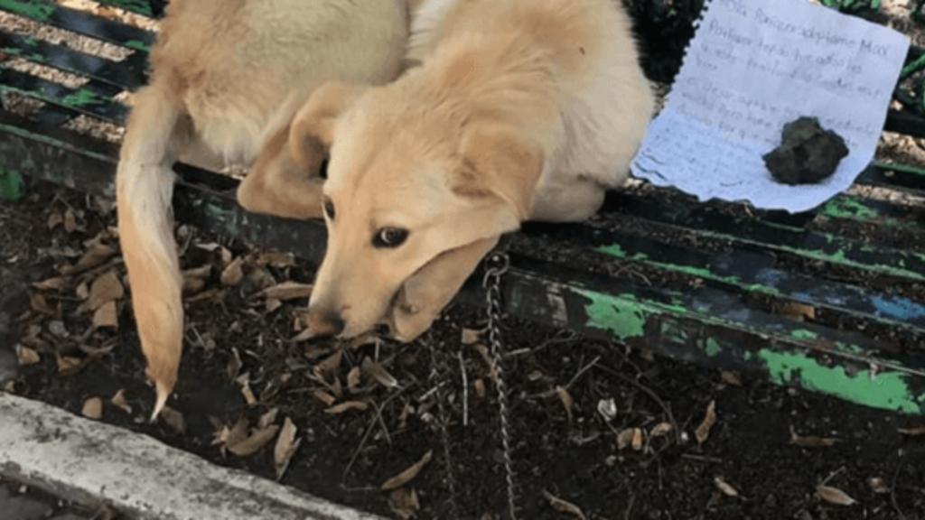 Az üzenetet a kutyus mellé tették (fotó: petrescuereport.com)